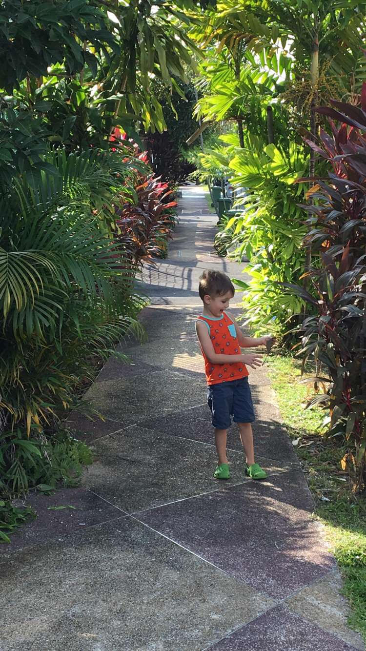 jungle sidewalk